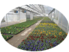 Biogas or Greenhouses